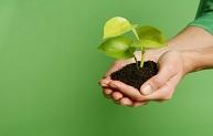 Green Plant Promo